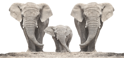 Was wir von Elefanten lernen können